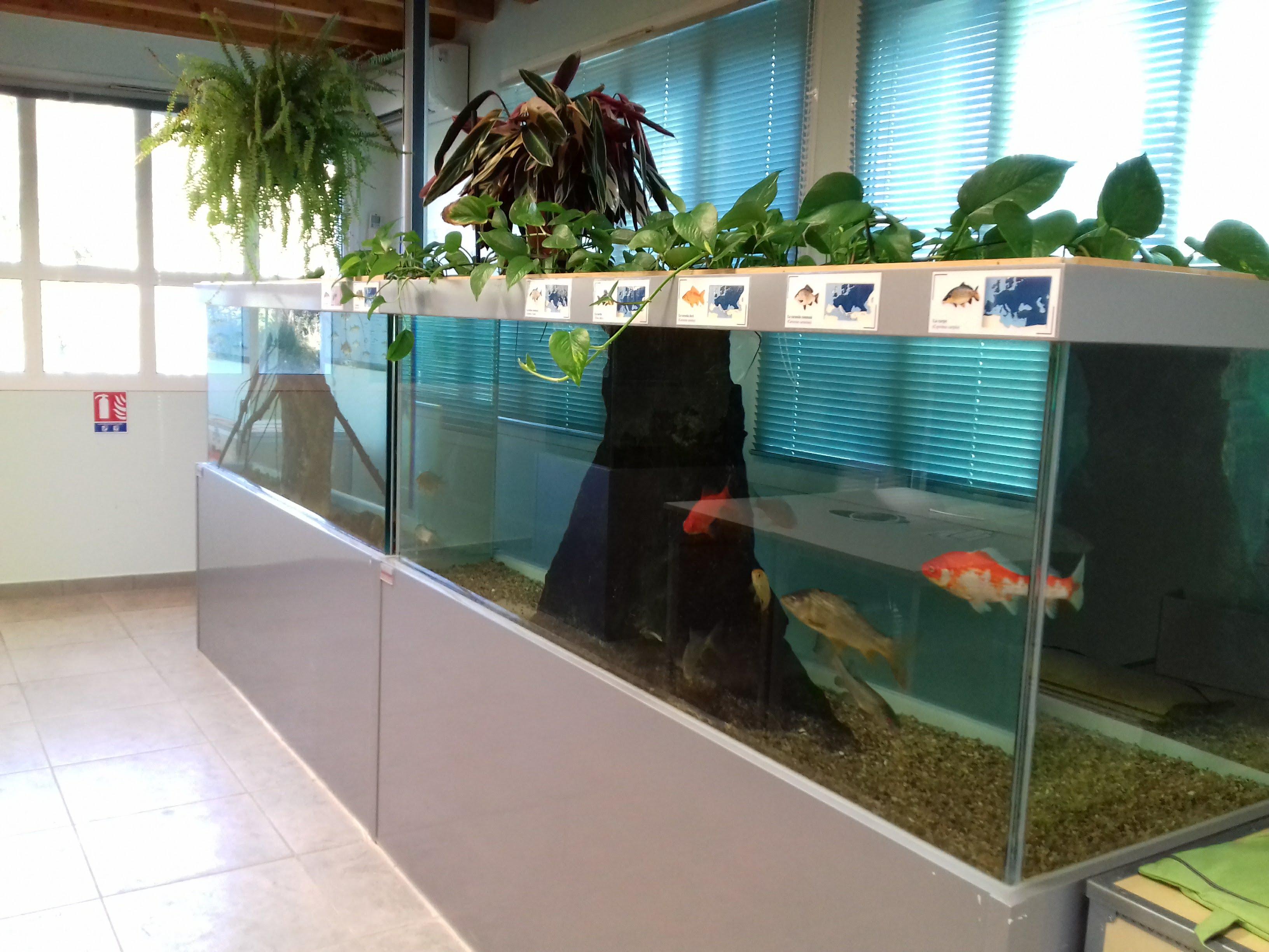 ANIM'EAU - aquarium